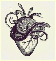 The heart is nothing but a mass of serpents. Evil and deceitful.