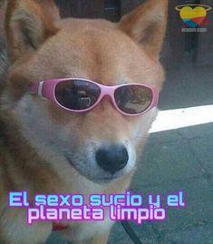 Cat Memes, Dankest Memes, Pingu Memes, Cute Love Memes, Wtf Face, Girls Rules, Wholesome Memes, Meme Faces, Stupid Memes