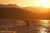Whale Watching! (Juneau)