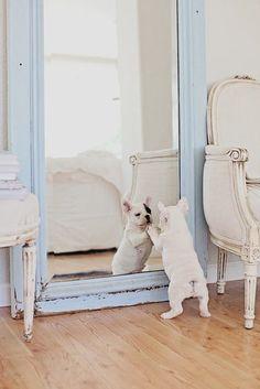 French Bulldog  Repinned by Hale Harden | #HHLifestyle #HaleHarden #LuxuryLife #Frenchies