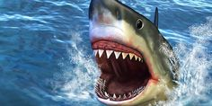 5 Reasons Why a Shark Would Not Make a Good Speech-Language Pathologist from Erik X Raj