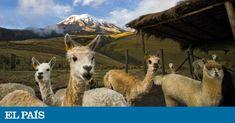 De Quito a Guayaquil, un viaje andino que se detiene ante la cima del volcán Chimborazo, el punto más alejado del centro de la Tierra