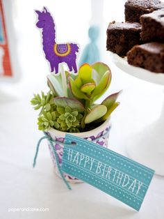 Alpaca Birthday Party Ideas - decorating with paper and real succulents!