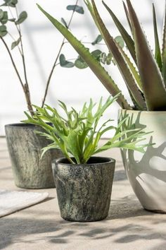 Peace Of Mind, Planter Pots, Chic, Shabby Chic, Elegant