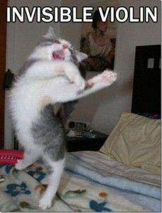 invisible cat violin. . #cat #humor #cats #funny #meme #lolcats #cute #quotes =^..^= www.zazzle.com/kittyprettygifts