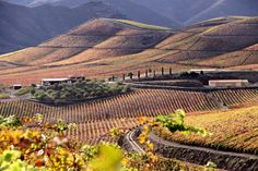 Douro - vineyards of the Port wine #Portugal