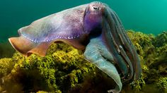 Check it out! Cuttle Fish!!