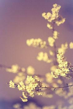 Blossoms by night by DJF-solo, via Flickr