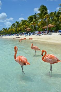 Flamingo Beach in Aruba