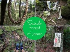 Our Journey to Suicide Forest, Aokigahara, Japan By the roots of Mt. Fuji lies a special forest, full of myths and sadness but at the same time extremely silent and graceful. This is Aokigahara, otherwise known as Suicide Forest. Only second to Golden Gate Bridge, it is the most popular suicide spot on earth. Yearly Continue Reading