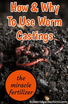 Why you need to use worm castings for a better garden! Learn how to power vegetables, perennials, annuals, and more with this amazing all-purpose fertilizer! Worm Farm Diy, Red Worm Composting, Earthworm Farm, Red Worms, Fall Vegetables, Garden Compost, Earthworms, Container Gardening, Hair