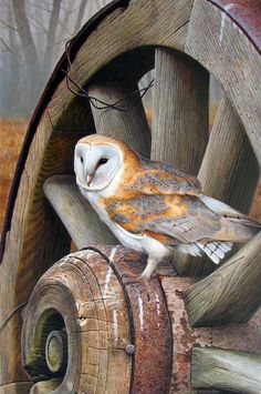 "colorel11: "" © Andrew Hutchinson wildlife painter """