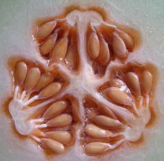 Melon seeds | Flickr - Photo Sharing!