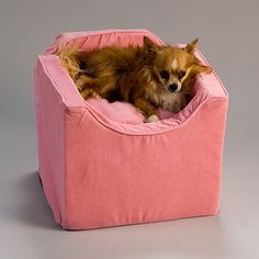 snoozer dog car seat