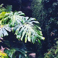 @frolicking_foliage  #plants #interior #painter #moodyports #portrait #vintage #painting #oil #canvas #colour #old #oldfashioned #hypebeast#hypebeastart #art #artsy #artist #like#follow #copenhagen #gallery #museum #greens #inspiration