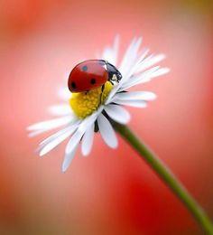 Beautiful Bugs, Beautiful Images, Animals Beautiful, Beautiful Flowers, Cute Animals, Nature Photography Flowers, Macro Photography, Bugs And Insects, Flower Wallpaper