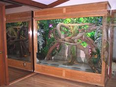diy cameleon cages | Diy Reptile Cage Plans...