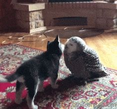 Pup And Owl Are Curious About Each Other