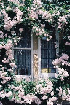 ☼ ☾ flowers growing outside a window. i can imagine myself sitting there reading a book and sipping a nice cup of tea :)