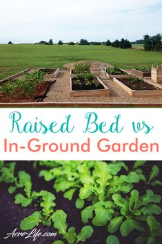 Choosing Raised Beds or an In-Ground Garden – Acre Life I love the pros and cons list for choosing a raised bed or in ground garden. It really helped me decide which garden type will work best for me. Raised Vegetable Gardens, Vegetable Garden Design, Raised Garden Beds, Raised Beds, Vegetable Gardening, Garden Types, Diy Garden, Potted Garden, Fence Garden