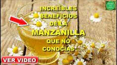 PROPIEDADES MEDICINALES DE LA MANZANILLA QUE NUNCA TE HABÍAN CONTADO   R...