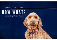Found a Dog? Now Wha