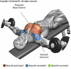 "DECLINE DUMBBELL FLYES - The exercise is fit for the definition of the chest, it involves the lower part of the muscle giving the classic ""round"" form and defining the hardest part of the chest to be worked. Fitness Workouts, 7 Workout, Fitness Motivation, Bike Workouts, Swimming Workouts, Swimming Tips, Cycling Motivation, Triceps Workout, Cycling Workout"