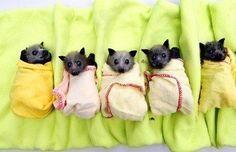 Morcegos animais encantadores