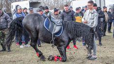 Uimitor cal, asa ceva nu vezi in fiecare zi Romania, Horses, Horse