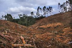 Cuando la montaña se ponga blanca. Política forestal y desarrollo en la sierra colombiana, por Camilo Alzate | FronteraD (Foto: Rodrigo Grajales)