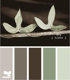 """Ivy Tints"" Palette by Design Seeds Design Seeds, Paint Schemes, Colour Schemes, Color Combos, Colour Palettes, Wall Colors, House Colors, Spa Paint Colors, Spa Colors"