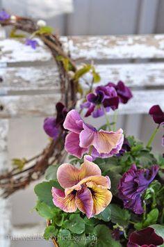 FLOWERS by titti & ingrid - Vår på Verandan. Styling and photography © Titti Malmberg for HWIT BLOGG.