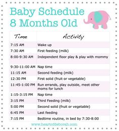 Discover a New 8 Month Old Schedule For Your Baby! Samples Included
