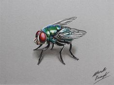 www.designbolts.com wp-content uploads 2014 04 Realistic-Colored-Pencil-Drawings-by-Marcello-Barenghi-98.jpg