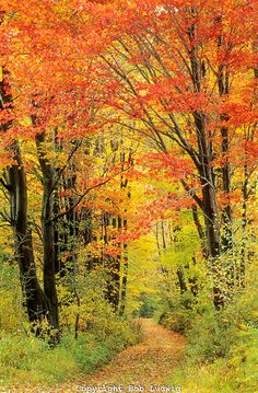 Autumn color lining forest path. Lincoln Gap, VT│ Bob Ludgwig Photography