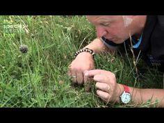 A short film on grass identification - YouTube