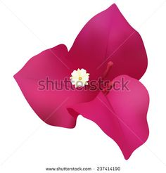 Find Vector background with bougainvillea Stock Images in HD and millions of other royalty-free stock photos, illustrations, and vectors in the Shutterstock collection. Mexican Flowers, Bougainvillea, Vector Background, Vectors, Royalty Free Stock Photos, Illustration, Image, Illustrations