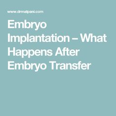 Embryo Implantation – What Happens After Embryo Transfer