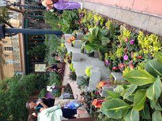 Concrete block planter garden at Epcot