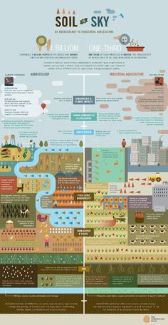 Feeding the World Sustainably: Agroecology vs. Industrial Agriculture (Infographic by the Christensen Fund)