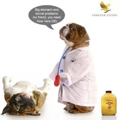 Aloe gel makes your dogs feel good!  :)