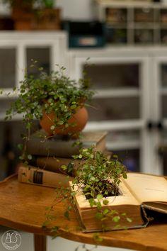 Oravanpesä: ASKARTELUA VANHASTA KIRJASTA. Plants, Diy, Bricolage, Do It Yourself, Plant, Homemade, Diys, Planets, Crafting