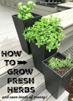 How to Grow Fresh Herbs (and save loads of money!) - 100 Days of Real Food