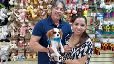 Cavalier puppy going home now! #Citipups #NYC #puppy #puppies #dogs #cute #pets #dog