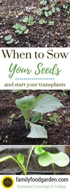 When to Sow or Transplant your Seeds