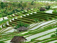 DONE! Bali, Indonesia