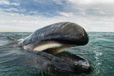 VEJA: Fotógrafo registra baleias e golfinhos de uma maneira incrível