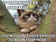 Grumpy cat : If brains were dynamite . Grumpy Cat Quotes, Funny Grumpy Cat Memes, Funny Animal Jokes, Funny Animal Pictures, Cute Funny Animals, Animal Memes, Cute Cats, Funny Cats, Animal Humor