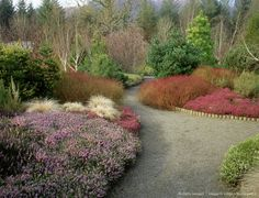 Image detail for -winter garden - rosemoor, with cornus stolonifera, erica carnea december, red canex comans