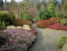 Image detail for -winter garden - rosemoor, with cornus stolonifera, erica carnea december, red canex comans